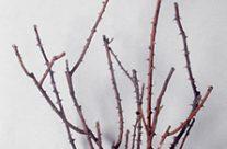 Tree People Untitled II